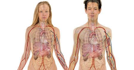 Anatomy - Free Books at EBD