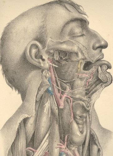 Large book cover: Surgical Anatomy